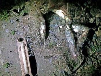 Браконьєром завдано 20,5 тис. грн збитків, - Івано-Франківський рибоохоронний патруль