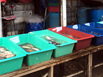 В місті Калуш на Прикарпатті зупинено незаконну торгівлю рибою та раками